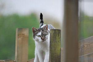kat over schutting