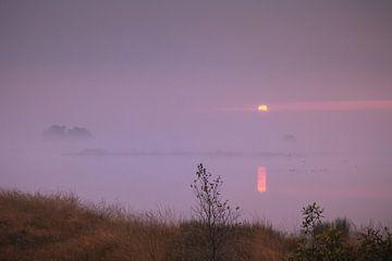 Ven bij zonsopkomst met ontwakende eenden