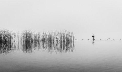 Een aalscholver in de mist in zwart en wit van Gea Gaetani d'Aragona