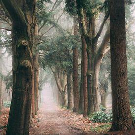 Misty Bos van Vladimir Fotografie