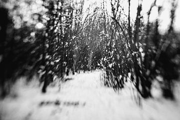 Verträumte Winterlandschaft von Marjolijn Maljaars