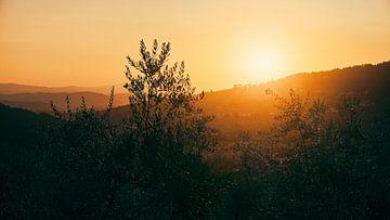 Toskanische Olivenbäume in der untergehenden Sonne von Studio Reyneveld