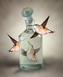 Drie Kolibries om een stopfles van