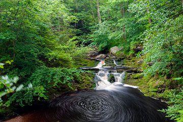 Wasserfall in den grünen Wäldern der Ardennen in der Nähe des Flusses Hoegne von Kim Willems