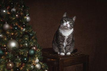 Vintage Fine Art Weihnachten Porträt Katze von Nikki IJsendoorn