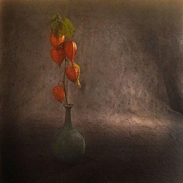 Laterne Pflanze von Herman Peters