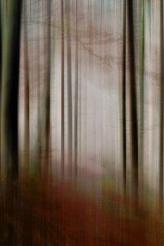 In mist - glade van Christine Nöhmeier