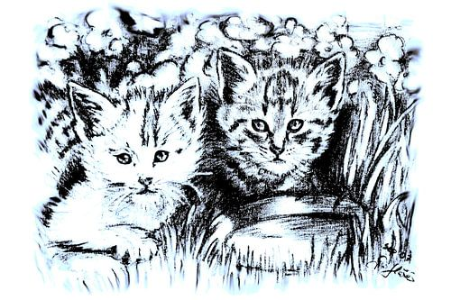 Baby Cats In Blue And White van