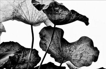 Het geheime leven van planten in Azië. #struggle van