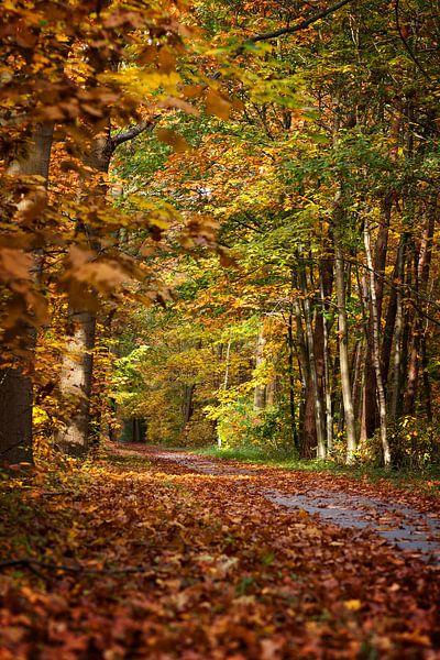 Herfst van Elly Damen