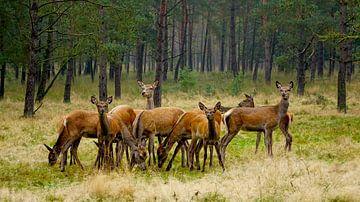 Dear Deers van Harry Hadders