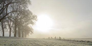 Zonlicht over de velden met rijp in de winter van Sjoerd van der Wal