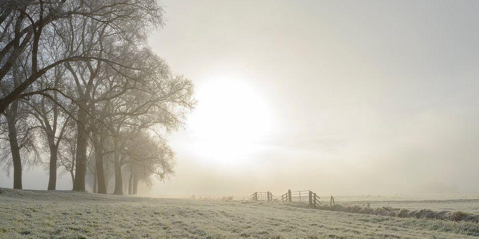 Zonlicht over de velden met rijp in de winter