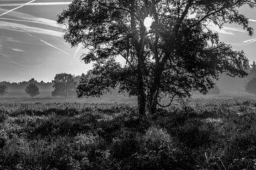 foto van de met heide begroeide heuvels in zwart-wit fotografie met tegenlicht van Peter Buijsman