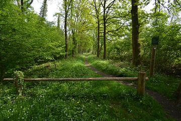 De Brand, Naturschutzgebiet bei Udenhout von Verrassend Brabant