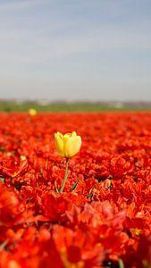 Gele tulp tussen de rode.  van