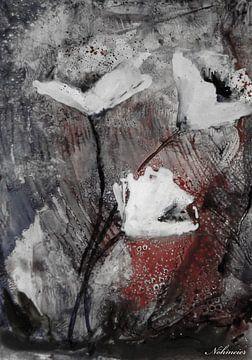 Mohnblumen  - Mohnart - weiss von Christine Nöhmeier