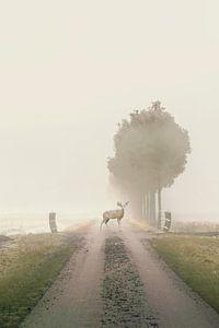 Nebel am Morgen von
