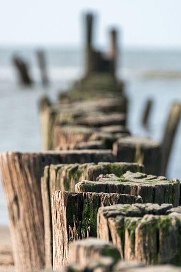 Palen aan zee van Inge Heeringa