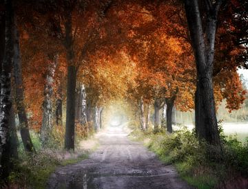 Herbstliche Schatten von Kees van Dongen