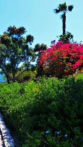 Heisler Park Laguna Beach van Marek Bednarek
