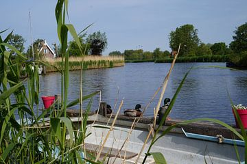 Enten entlang der Uferpromenade von Martine Overkamp-Hovenga