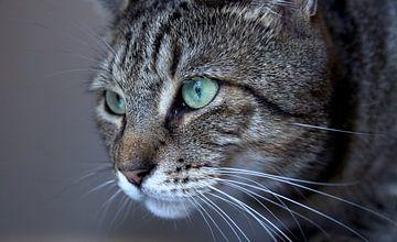 Kat gefixeerd op de prooi van Martin Boerman