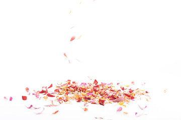 vallende bloemblaadjes van Anita Visschers