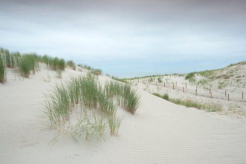 """Duinen op de nieuwe """"Maasvlakte 2"""" #4793 van"""