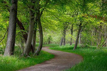 Chemin sinueux dans une forêt de printemps, forêt de hêtres sur Henno Drop