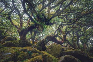 Het bos van de wijze man van Joris Pannemans - Loris Photography