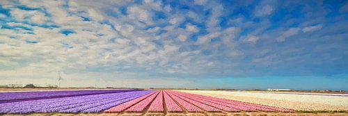 bloembollenveld met hyacinten van