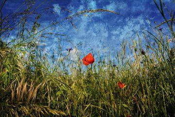 Fleur de pavot dans les champs sur Claudia Evans