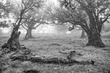 Oude bomen in zwart-wit sur Michel van Kooten
