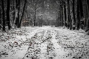 Sneeuw in het bos van
