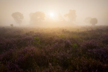 Mistige zonsopkomst heide Veluwe von Rick Kloekke