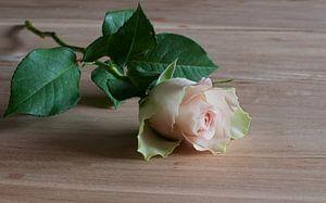een roze roos