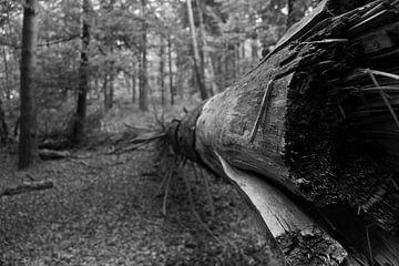 Der gefallene Baum von Sander de Jong
