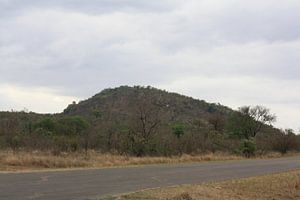 Kruger Park van