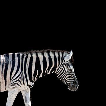 Zebra auf Schwarz von Mario van Telgen