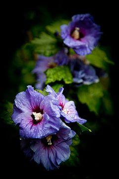 Wilde bloemen na regen van Jesse Meijers