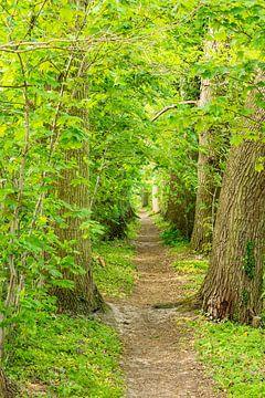Ein Weg im Wald auf der Insel Usedom von Rico Ködder