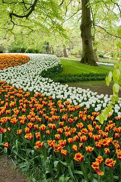 Tulip field in the Keukenhof von Tamara Witjes