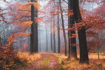 Wald-Tagtraum von Tvurk Photography