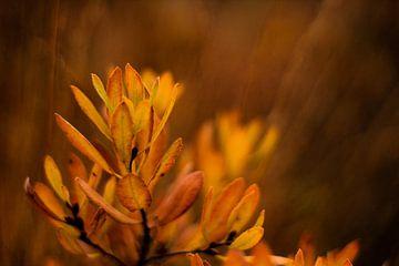 Herbstliche Vegetation von Laura Reedijk