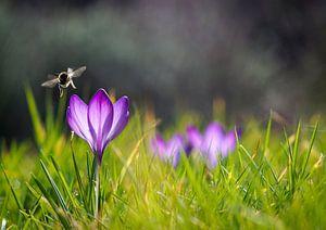 Fast Frühling von Ronnie Reul