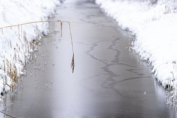 Graben im Winter bei Schnee und Eis. Das Schilf über dem Graben. von Lieke van Grinsven van Aarle