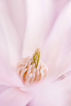 In het roze gehuld sur