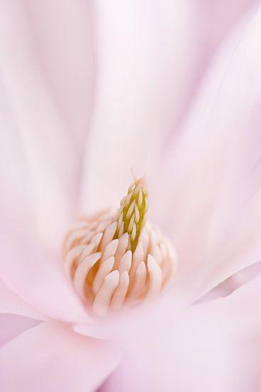 In het roze gehuld van LHJB Photography