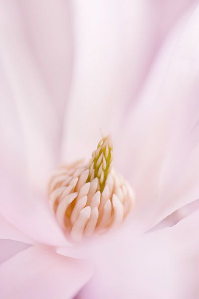 In het roze gehuld